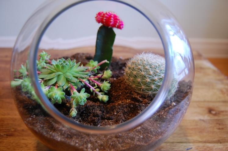 les_belles_folies_terrarium_cactus