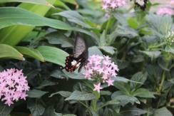lesbellesfolies_papillons_liberte